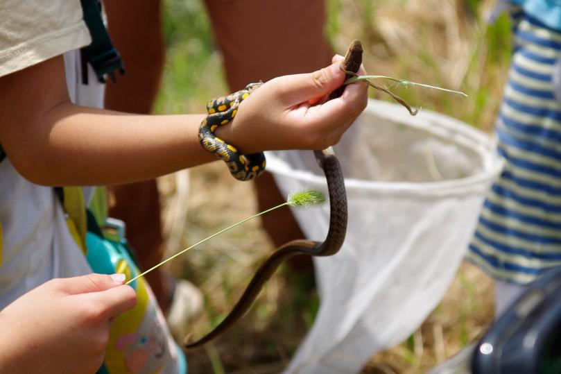 中には蛇を捕まえる猛者も